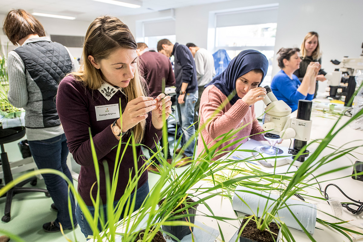 2018 training brings researchers to forefront of wheat breeding