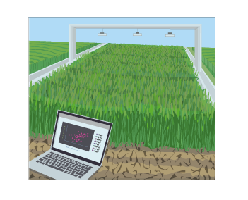 designing_future_wheat_phenotyping